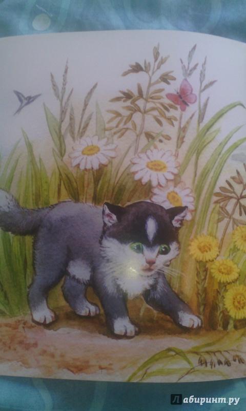 Толстой котенок картинка