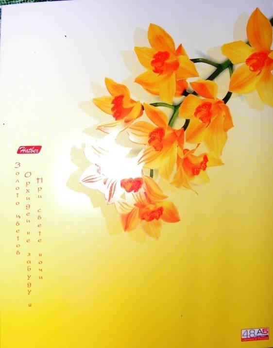 Иллюстрация 1 из 2 для Тетрадь 48 листов Японские мотивы (48Т5влС1) | Лабиринт - канцтовы. Источник: winter_W