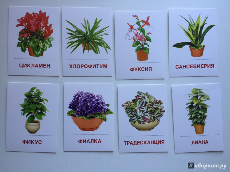 Покажите комнатные растения с картинками