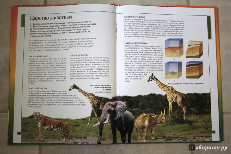 Иллюстрация 21 из 32 для Калейдоскоп знаний. Животные | Лабиринт - книги. Источник: P.  A.