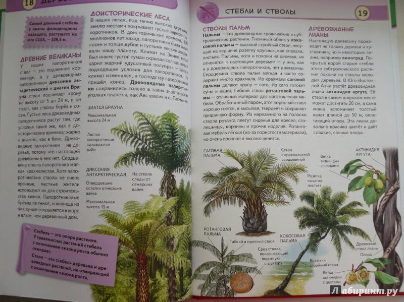Иллюстрация 4 из 16 для Тропические растения. Удивительная флора жарких стран - Юлия Школьник | Лабиринт - книги. Источник: sv_33