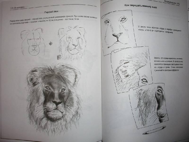 Иллюстрация 20 из 21 для Рисуем животных - Вальтер Хальбингер   Лабиринт - книги. Источник: Tiger.