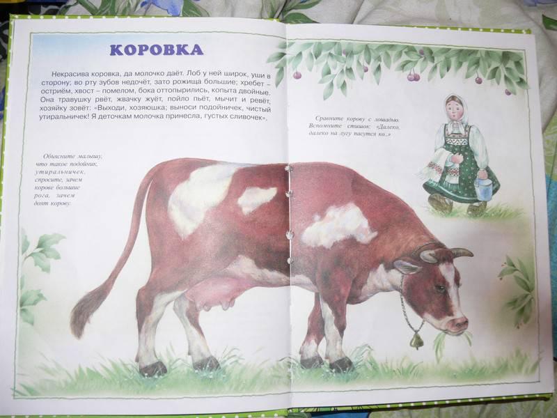 Иллюстрация 3 из 20 для О диких и домашних животных. 2-4 года   Лабиринт - книги. Источник: Irbis