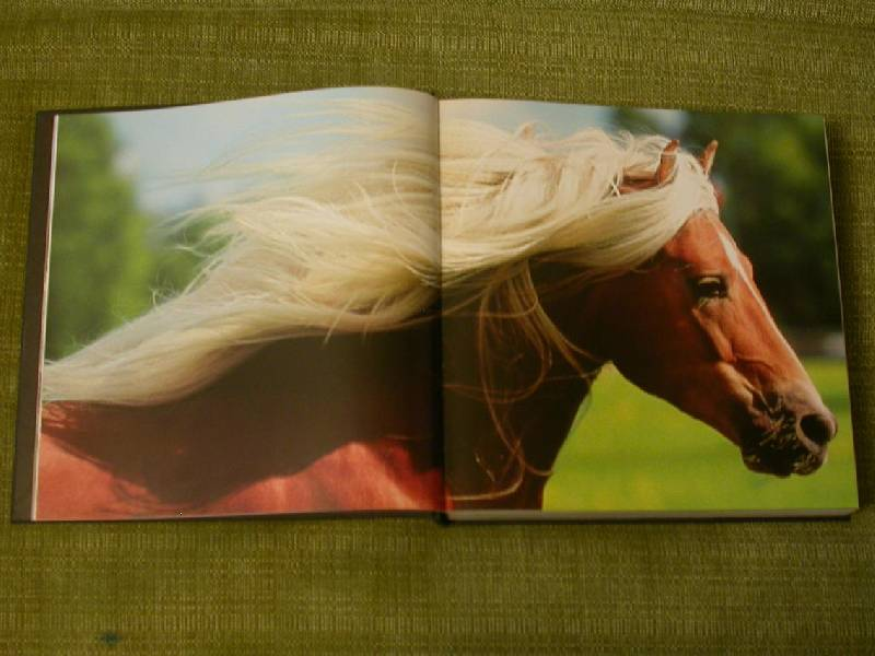 Иллюстрация 17 из 25 для Лошади. Самые лучшие фотографии | Лабиринт - книги. Источник: 3N