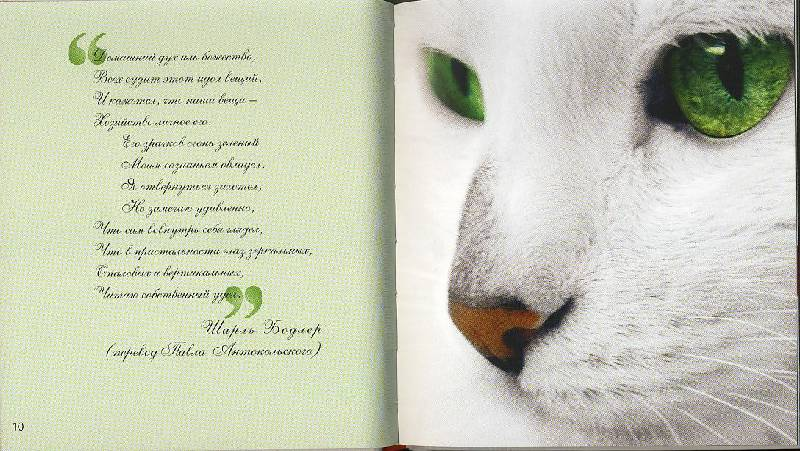 была только признание в любви стихи собственного сочинения татуировки фернандо это