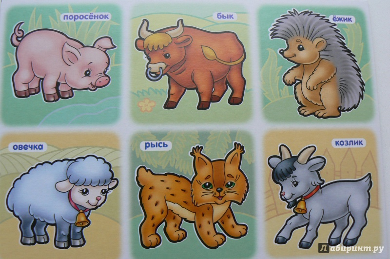 Познавательные картинки животных для детей