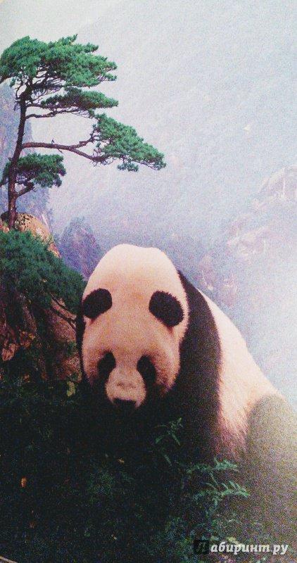 Иллюстрация 28 из 84 для Животный мир. Иллюстрированный атлас - Бамбарадения, Вудрафф, Гинзберг | Лабиринт - книги. Источник: Лабиринт