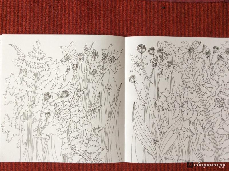 Иллюстрация 11 из 27 для Раскраска. Прятки-загадки ...
