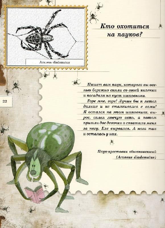 Иллюстрация 99 из 106 для Письма насекомых - Ольга Кувыкина | Лабиринт - книги. Источник: Zhanna