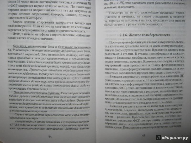 Иллюстрация 29 из 37 для Эмбриология. Учебное пособие - Студеникина, Слука | Лабиринт - книги. Источник: Евгения39
