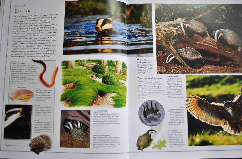 Иллюстрация 44 из 84 для Животный мир. Иллюстрированный атлас - Бамбарадения, Вудрафф, Гинзберг | Лабиринт - книги. Источник: Тамар@