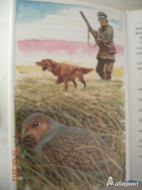 Иллюстрация 24 из 25 для Тайна ночного леса - Виталий Бианки   Лабиринт - книги. Источник: Honeyed