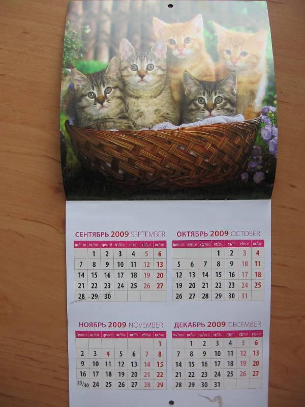 Иллюстрация 1 из 6 для Календарь. 2010 год. Котята (30905) | Лабиринт - сувениры. Источник: Red cat ;)