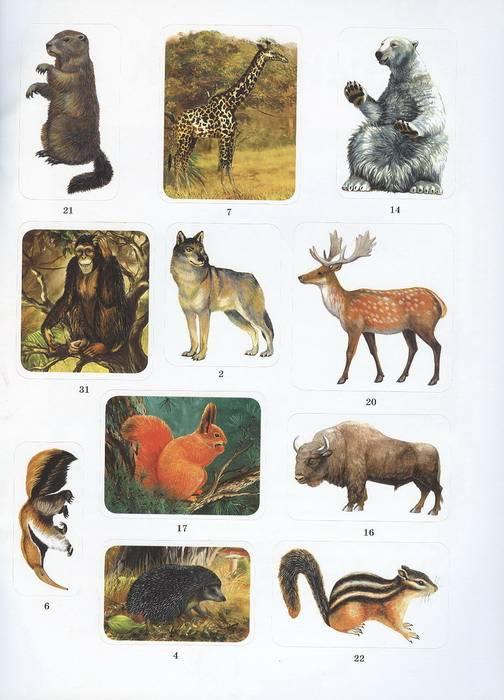 Иллюстрация 1 из 4 для Животные - А. Бугаев | Лабиринт - книги. Источник: Елена