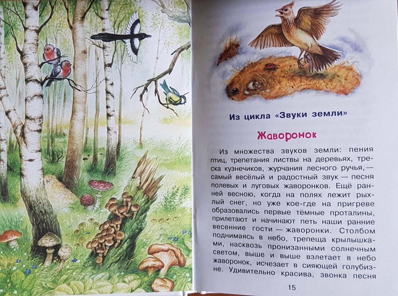 Лесные картинки рассказ