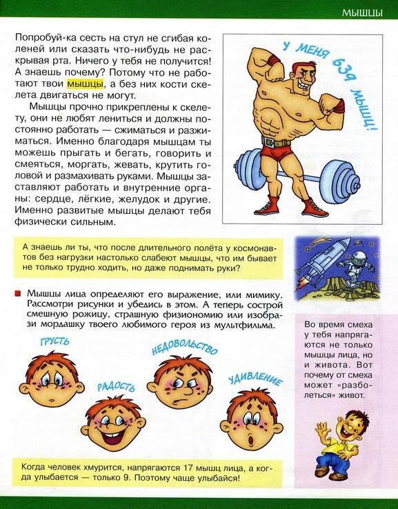 Иллюстрация 1 из 2 для Ты и твое тело - В.В. Лабутина | Лабиринт - книги. Источник: Дерингер  Анна Борисовна