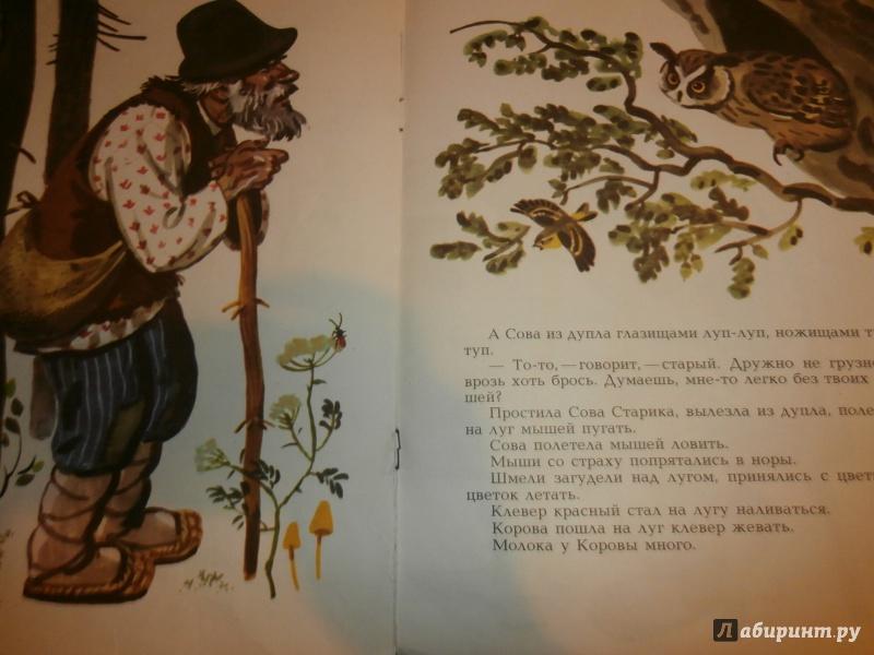 Иллюстрация 9 из 36 для Сова - Виталий Бианки | Лабиринт - книги. Источник: Tiger.