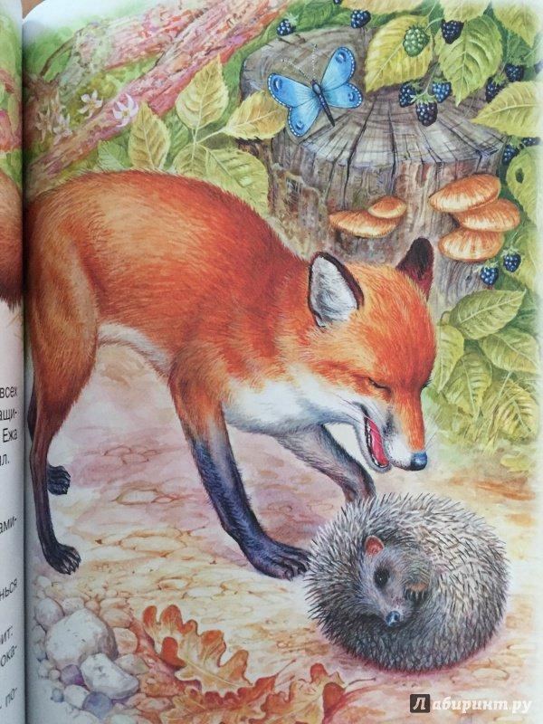 сначала иллюстрации к сказкам виталия бианки той