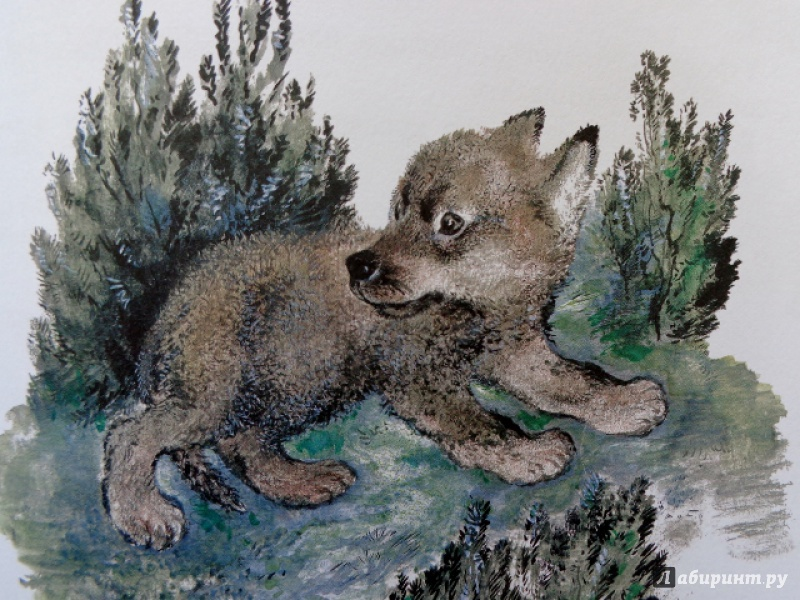 вату евгений чарушин рисунки животных магазинах центре