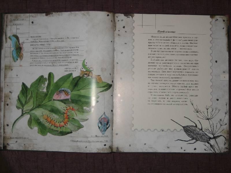 Иллюстрация 19 из 106 для Письма насекомых - Ольга Кувыкина | Лабиринт - книги. Источник: Трухина Ирина