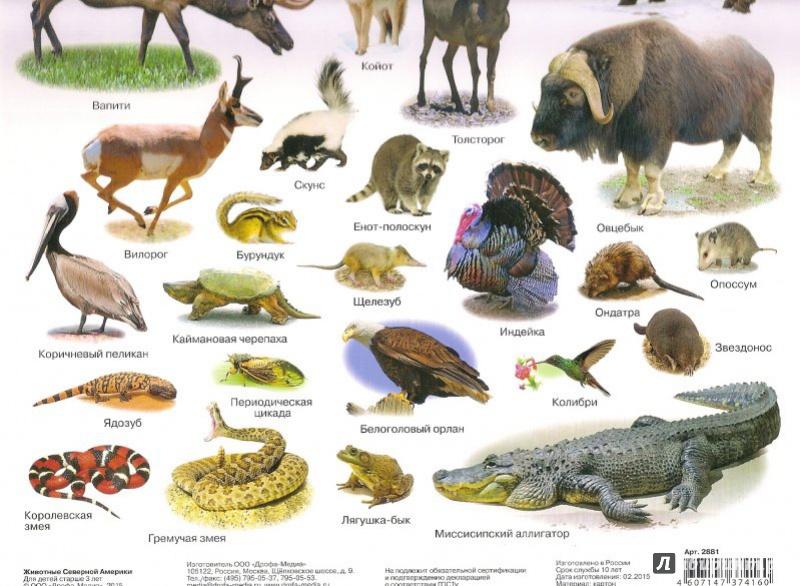 рассказать животные южной америки фото с названиями данной странице