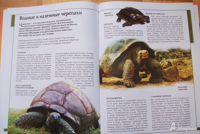 Иллюстрация 11 из 32 для Калейдоскоп знаний. Животные | Лабиринт - книги. Источник: Наташа Кравцова
