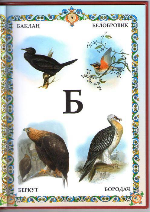 все птицы по алфавиту белый