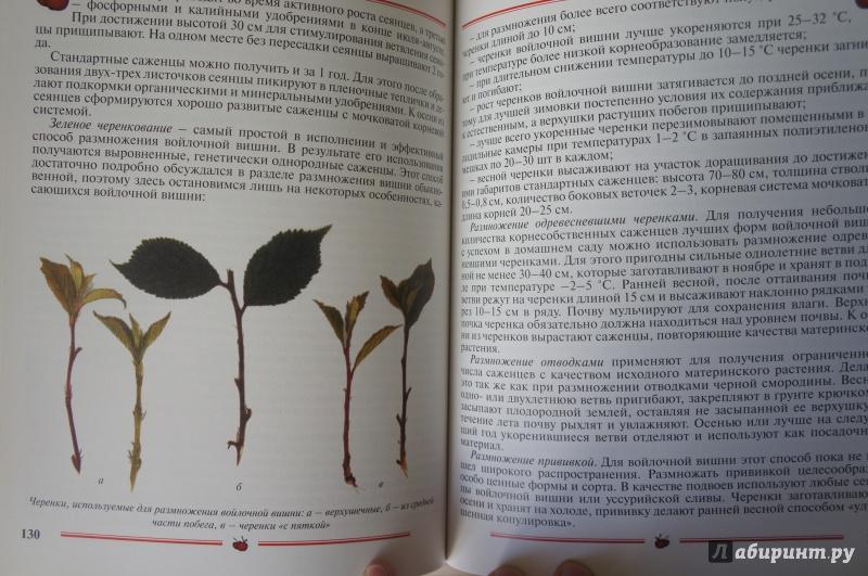 Иллюстрация 6 из 33 для Вишня, черешня. Пособие для садоводов-любителей - Еремина, Юшев   Лабиринт - книги. Источник: Синявина Ольга Анатольевна