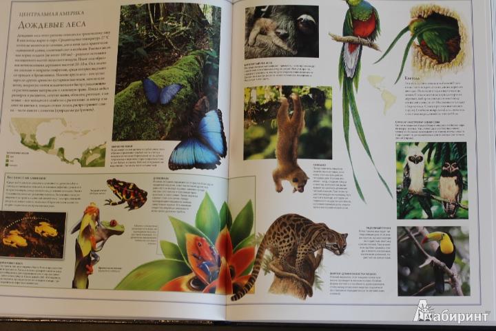 Иллюстрация 76 из 84 для Животный мир. Иллюстрированный атлас - Бамбарадения, Вудрафф, Гинзберг | Лабиринт - книги. Источник: LittleDragon