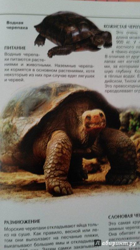 Иллюстрация 28 из 32 для Калейдоскоп знаний. Животные | Лабиринт - книги. Источник: Madam