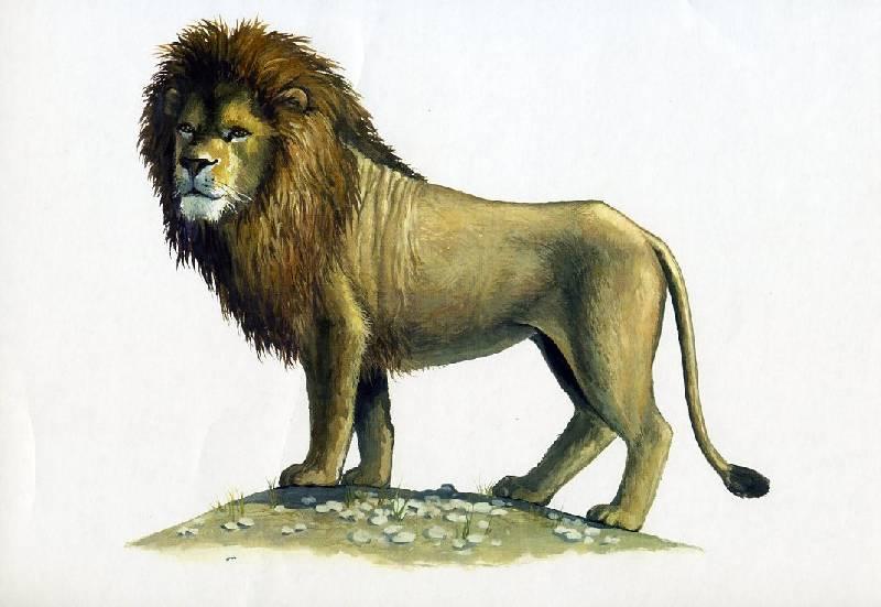 картинки лев для доу локоть крови
