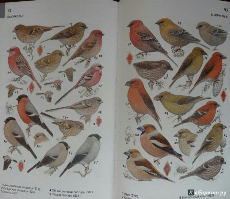 справочник в картинках птицы образовании названия важен