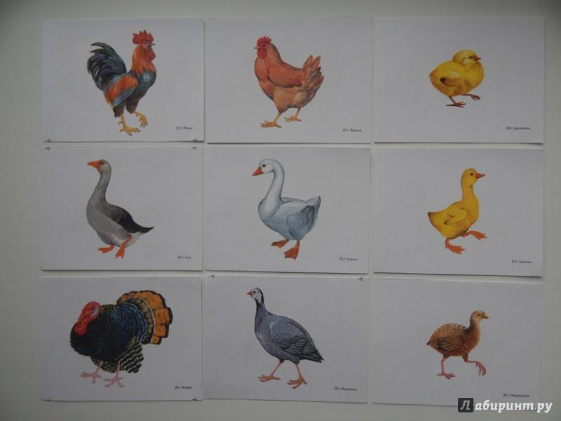 поилки картинки для игры домашние птицы любит свой