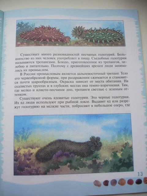 Иллюстрация 37 из 39 для Тайны морского дна: книга для чтения детям - Геннадий Целищев | Лабиринт - книги. Источник: Осьминожка