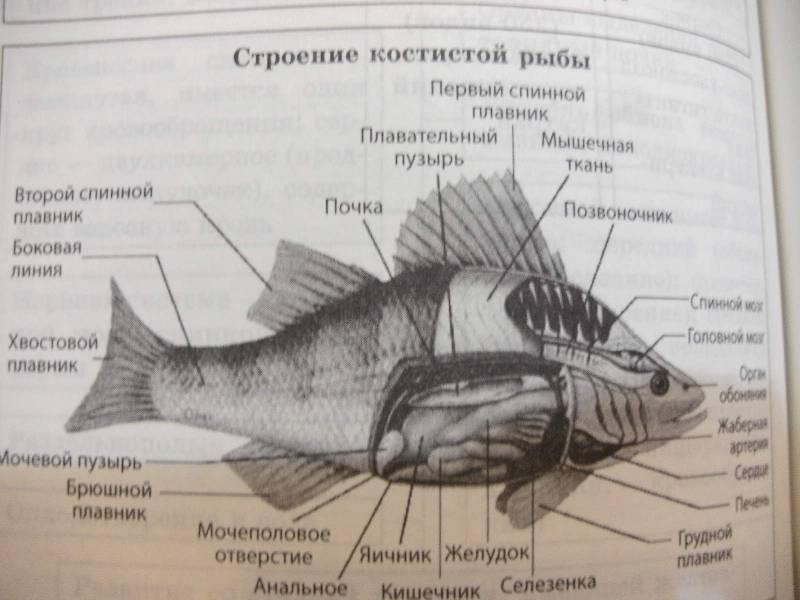 Биология в картинках и схемах огэ лака