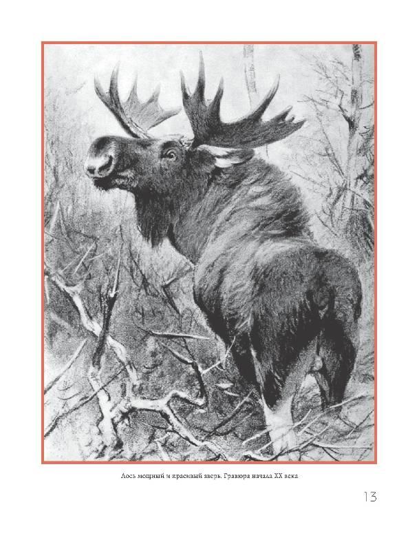 Иллюстрация 10 из 15 для Охота на парнокопытных - Олег Малов | Лабиринт - книги. Источник: Danon