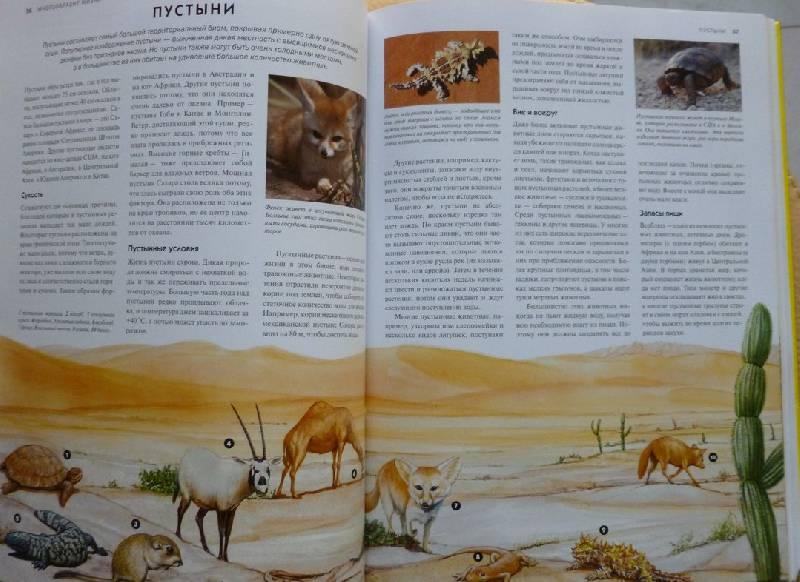 Иллюстрация 7 из 19 для Животные. Визуальная энциклопедия - Том Джексон   Лабиринт - книги. Источник: дева