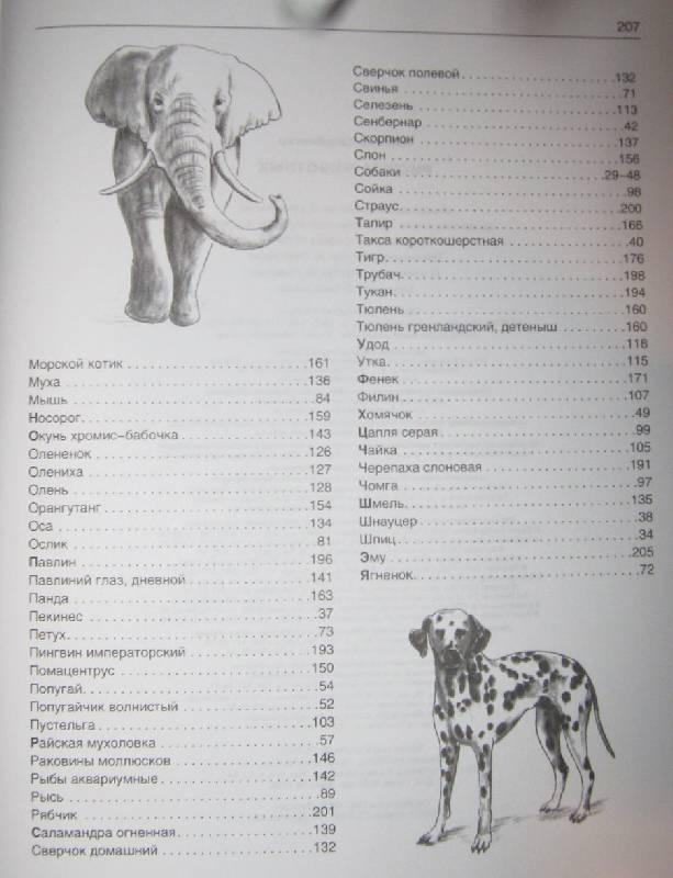 Иллюстрация 2 из 21 для Рисуем животных - Вальтер Хальбингер | Лабиринт - книги. Источник: Спанч Боб