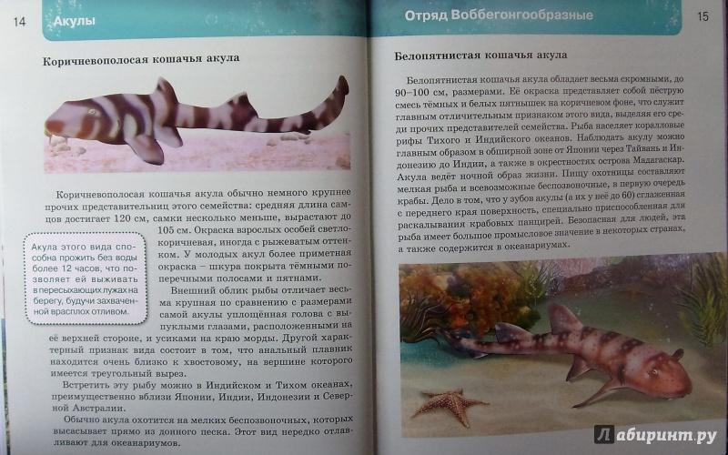 Иллюстрация 11 из 37 для Акулы | Лабиринт - книги. Источник: Соловьев  Владимир