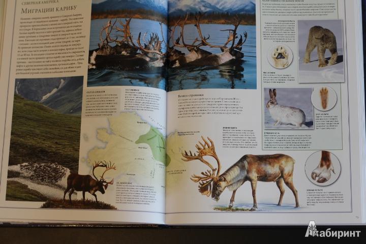 Иллюстрация 74 из 88 для Животный мир. Иллюстрированный атлас - Бамбарадения, Вудрафф, Гинзберг   Лабиринт - книги. Источник: LittleDragon