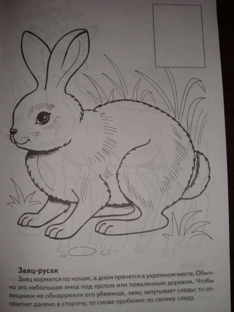 раньше рисунки животных которые занесены в красную книгу россии самые