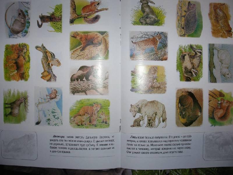 Иллюстрация 7 из 12 для Животные русского леса. Книжка с наклейками | Лабиринт - книги. Источник: Tiger.