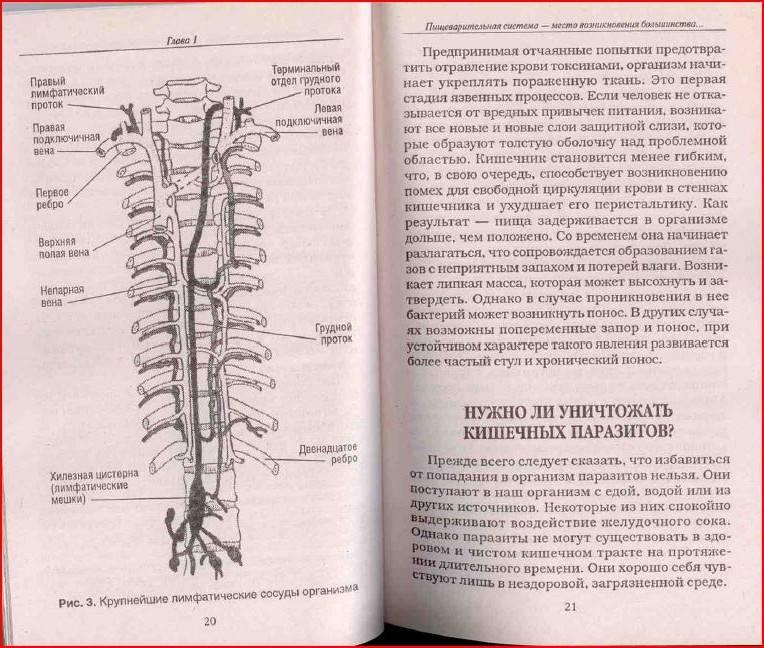 Иллюстрация 5 из 8 для Очистите свой организм от болезней - Андреас Мориц | Лабиринт - книги. Источник: aserebrov
