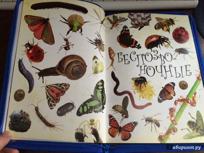 Иллюстрация 7 из 19 для Живая природа. Звери, птицы, животные и растения вокруг нас - Терри Дженнингс | Лабиринт - книги. Источник: Mrs.Paprika