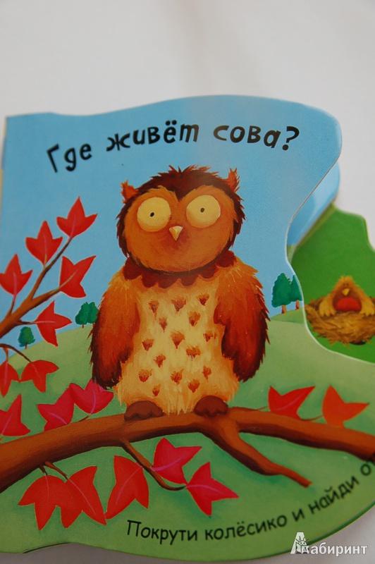 Иллюстрация 7 из 18 для Где живет сова? - Татьяна Хабарова | Лабиринт - книги. Источник: Буланцева Аня