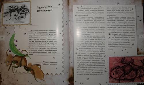 Иллюстрация 33 из 106 для Письма насекомых - Ольга Кувыкина | Лабиринт - книги. Источник: Наталья Бухтиярова