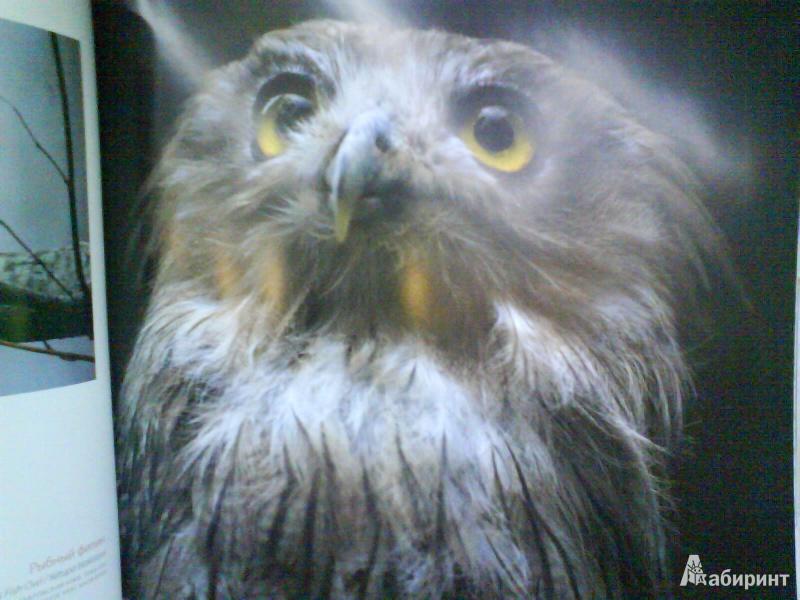 Иллюстрация 4 из 14 для Птицы России - Валерий Малеев | Лабиринт - книги. Источник: Мила