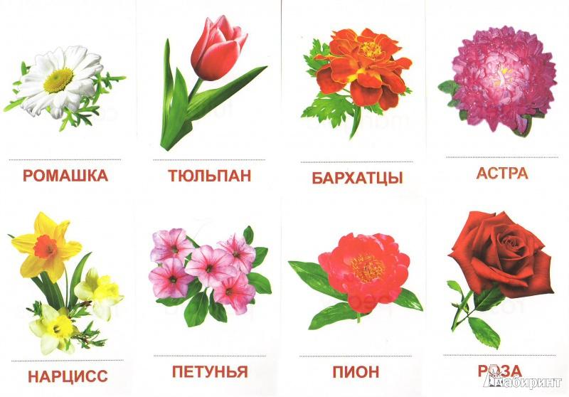 Класс, садовые цветы картинки с названиями для детей