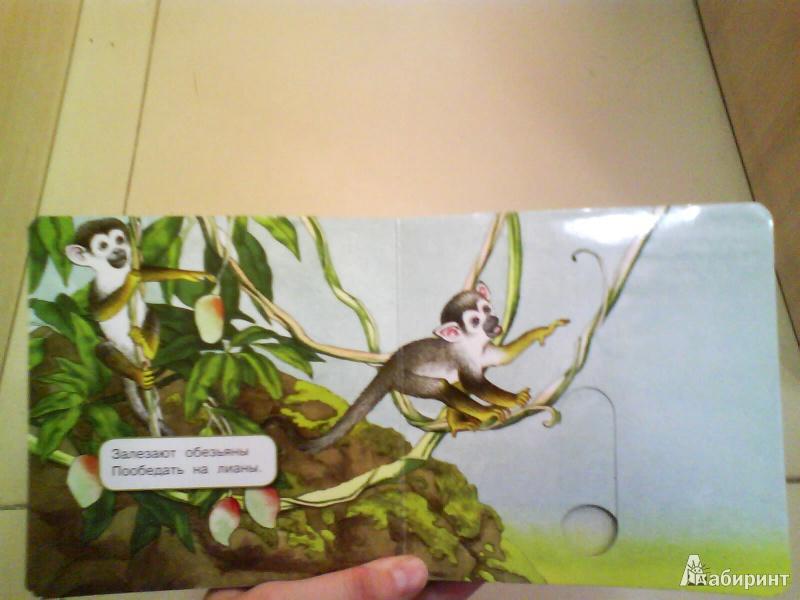 Иллюстрация 6 из 48 для Что у мишки на обед? - Юлия Шигарова | Лабиринт - книги. Источник: Мила