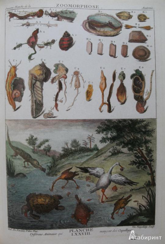 Иллюстрация 12 из 12 для Shell - Muscheln - Coquillages - Carpita, Willmann, Willmann | Лабиринт - книги. Источник: Комаров Владимир